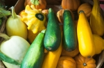Summer Squash and Gourds
